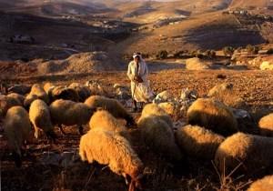 Shepherd-and-sheep-2